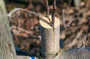 Калибровка дерева своими руками