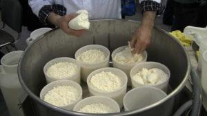 Технология производства сыра в домашних условиях