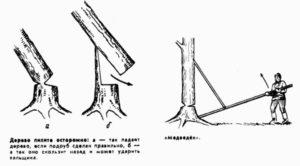 Как правильно рубить дерево топором?